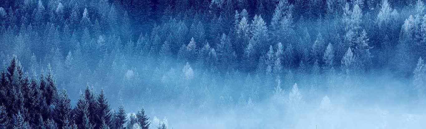John Deere Forestry nyhetsbrev januari 2020